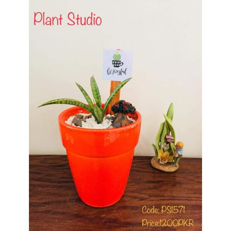 Snake Plant with Orange Pot