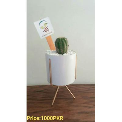 Cactus Plant Pot with Iron Stand