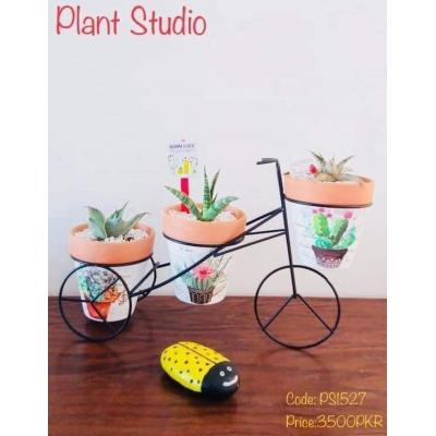 Aloe Vera Plant Pots On Cycle Stand