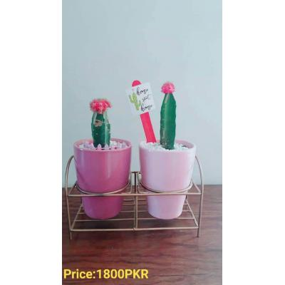 Cactus Plant with a Iron Stand